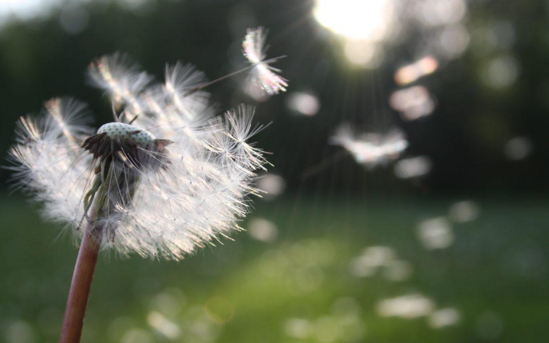 Gjesteinnlegg fra en pollenallergiker.