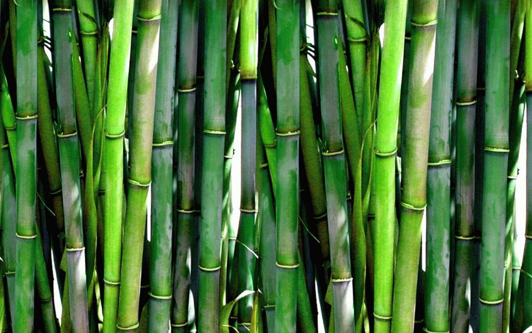 Er bambus bare bløff?